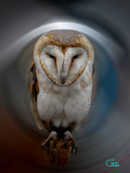 Poster featuring the photograph Owl Alba  Spain  by Colette V Hera  Guggenheim