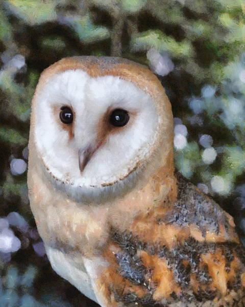 Poster featuring the digital art Owl - Bright Eyes 2 by Paul Gulliver