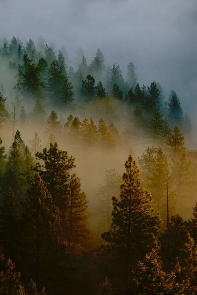 Pacific Northwest Morning Mist Poster