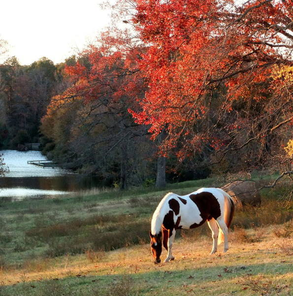 Paint Horse In The Fall Poster