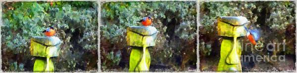 Painted Bullfinch Trio Poster