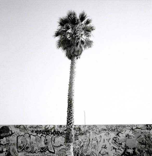 Palm Tree And Graffiti Poster