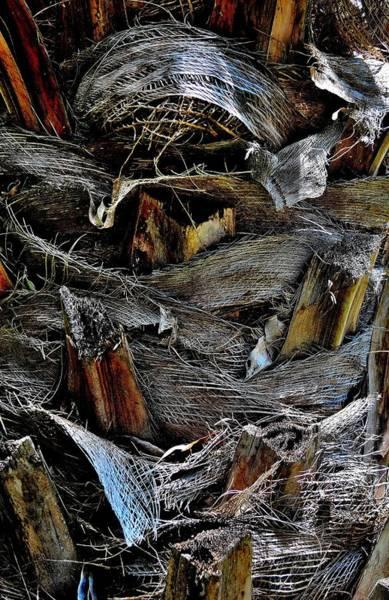 Palm Tree Trunk - Darwin - Australia Poster