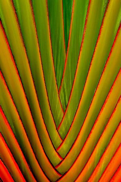Palm Weave Fine Poster