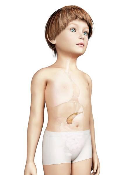 Pancreas Of Boy Poster