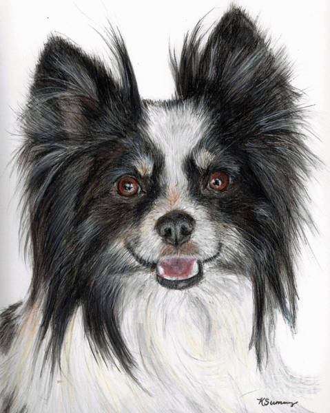 Papillon Painting Poster
