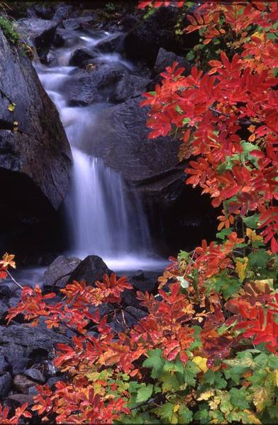 Paradise Valley Stream In Fall Poster