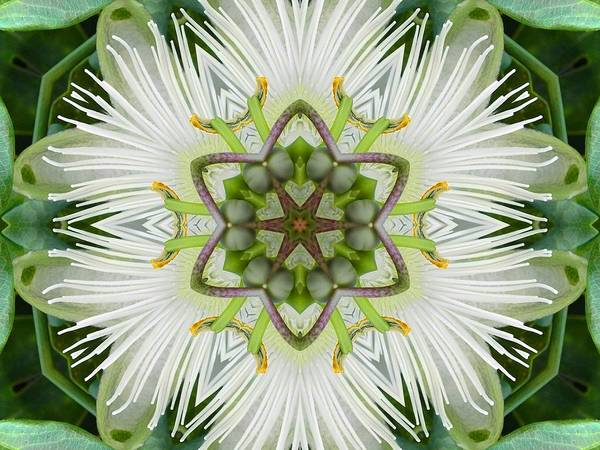Passion Flower Mandala Poster