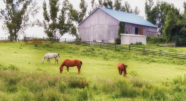 Poster featuring the photograph Pasture by Garvin Hunter
