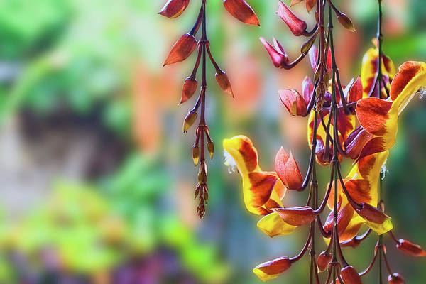 Pending Flowers Poster