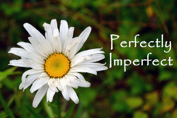 Perfectly Imperfect Daisy Flower Poster
