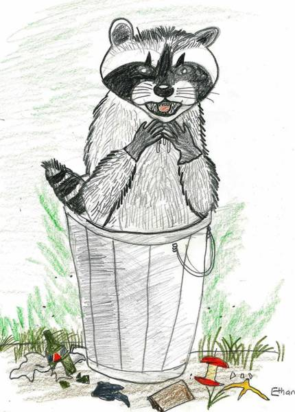 Poster featuring the drawing Pesky Raccoon by Ethan Chaupiz