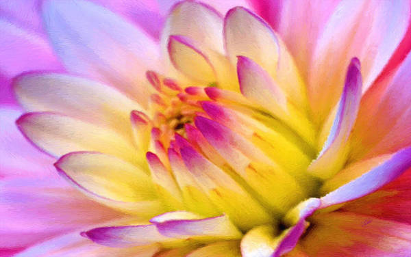 Pink And White Water Lily Poster
