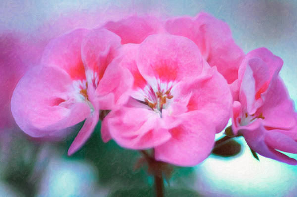 Poster featuring the photograph Pink Beauty by Garvin Hunter