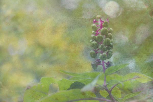 Pink-stemmed Plant Poster