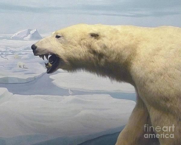 Polar Bear Diorama Poster