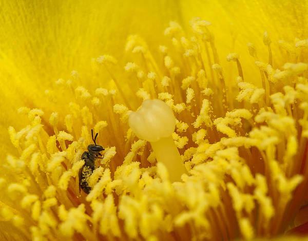 Pollen Forest Poster
