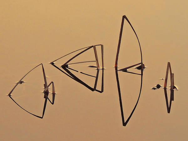 Pond Reeds Sunrise 1 Poster