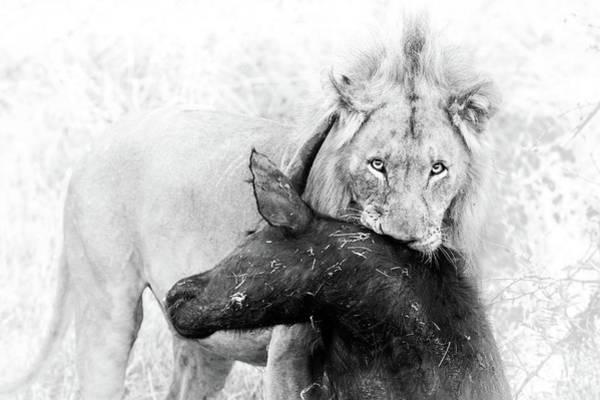Poor Buffalo Poster