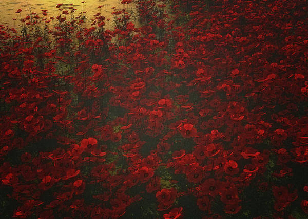 Poppies In The Rain Poster