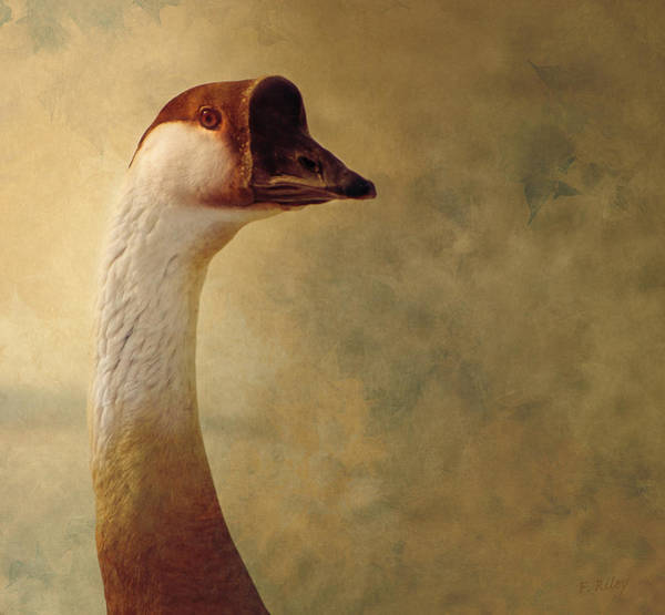 Portrait Of A Goose Poster