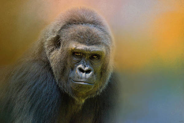 Portrait Of A Gorilla Poster