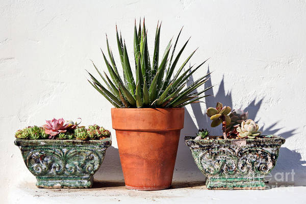 Poster featuring the photograph Potted Succulents by Kate McKenna