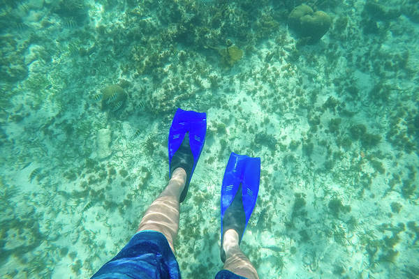 Pov Shot Of Snorkelers Feet Wearing Poster