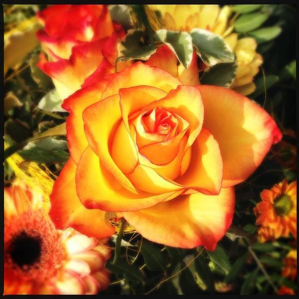 Pretty Orange Rose Poster
