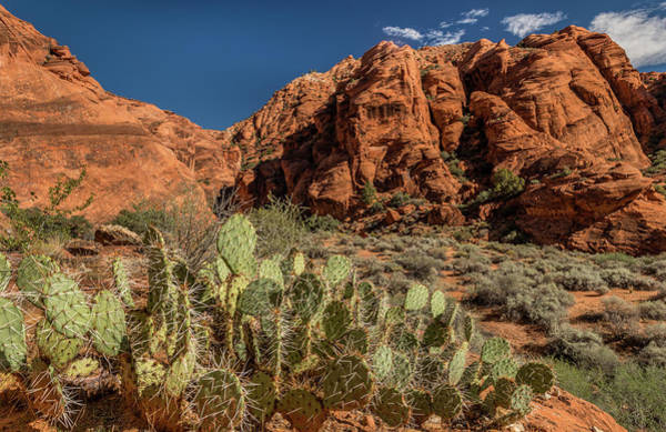 Prickly Pear Cactus Along Water Canyon Poster