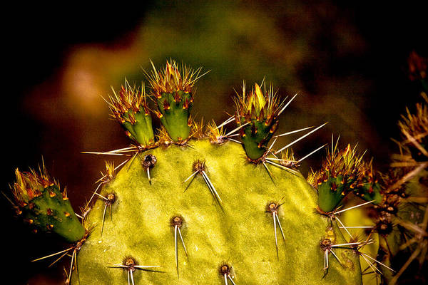 Prickly Pear Spring Poster