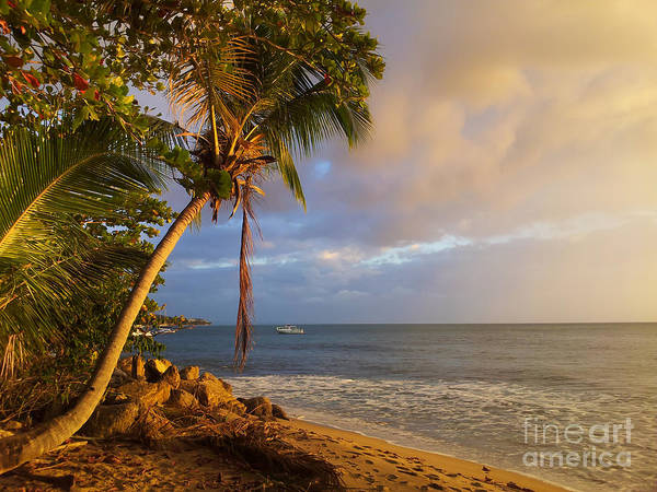 Puerto Rico Palm Lined Beach With Boat At Sunset Poster
