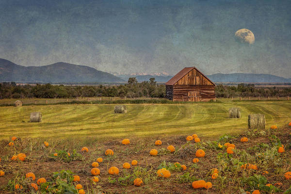 Pumpkin Field Moon Shack Poster
