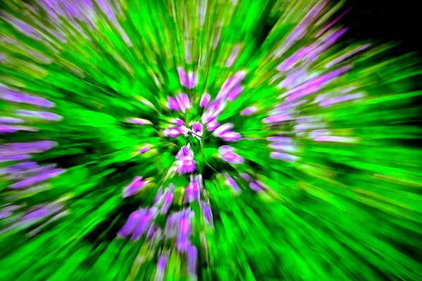 Purple Burst Poster