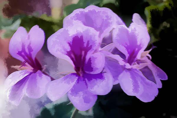 Purple Geraniums  Poster