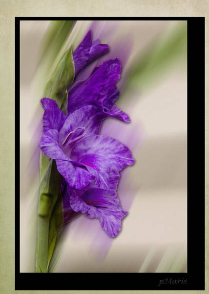 Purple Gladiolus Bloom Poster