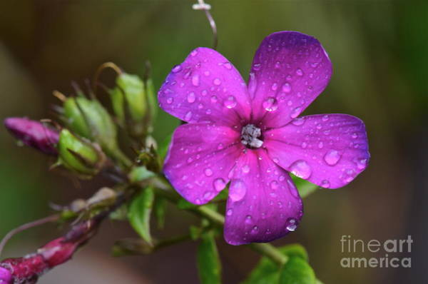 Purple Rain... Poster