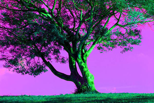 Purple Sky Tree Poster