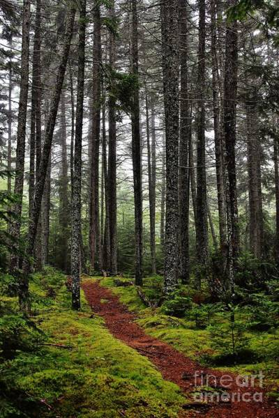 Quiet Woods Poster