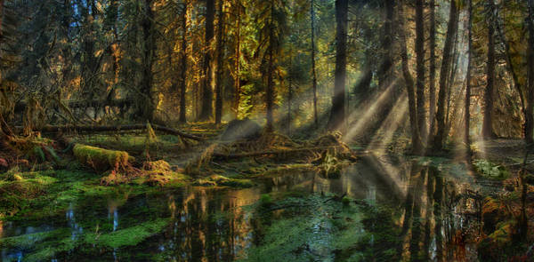 Rain Forest Sunbeams Poster