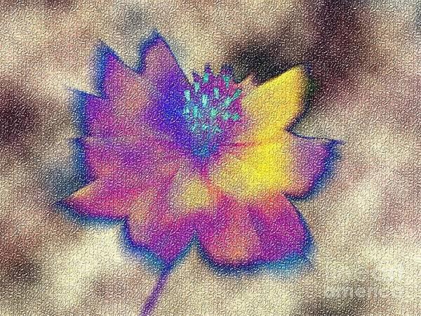 Rainbow Flower Poster