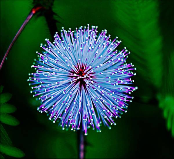Rainforest Flower Poster