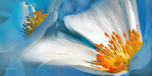 Recuerdos De La Primavera Poster