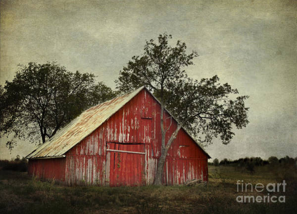Red Barn With A Tree Poster