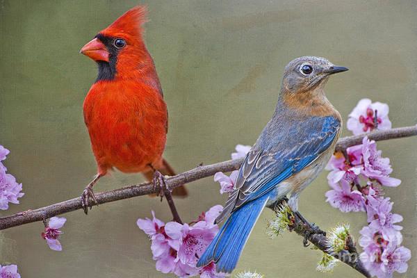 Red Bird Blue Bird Poster