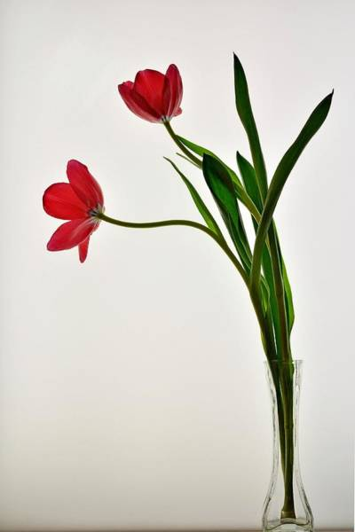 Red Flowers In Glass Vase Poster