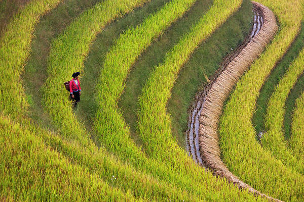 Red Yao Girl On The Rice Terrace Poster
