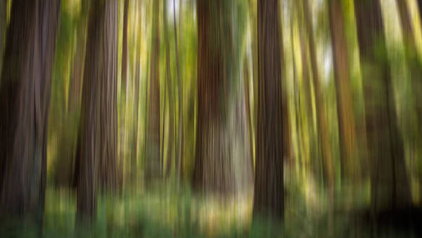 Redwood Dream Poster