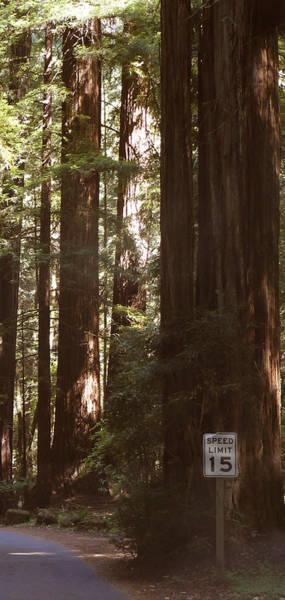 Redwoods 2 Poster