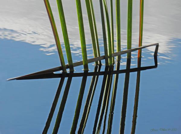 Reeds In Wetlands Poster